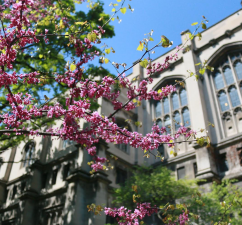Instagram photo of campus in spring